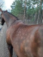 """200418 Min egen """"Pippi"""" häst Rosse :)"""