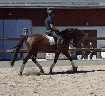 D-ponnyn Rosse :) med Kristian i sadeln.