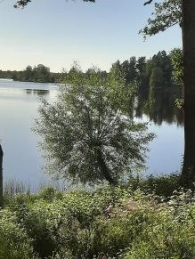 200614 Festligt bollträd vid sjön