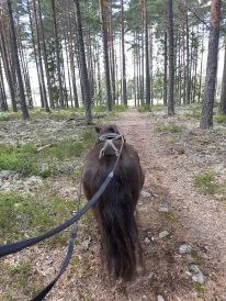 Även Lena fick ett joggingpass idag :)