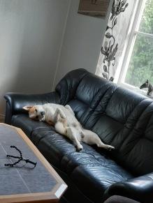 200903 När det ösregnar ute är det skönt att krypa upp i soffan å snooza lite :)
