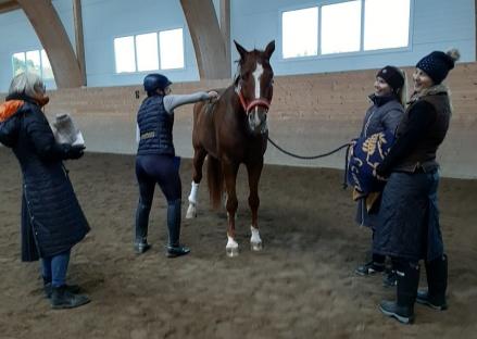 Är man GP häst så krävs viss uppbackning ! Don David med sitt team :). Ann Mörk, Carolina Mörk, Amanda Berglund och Elin Nilsson.