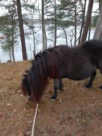201107 Min lilla PT Lena på sim morgonpromenad runt dammen.