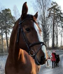 Julaftonspromenad med Hästarna och Veronica :)