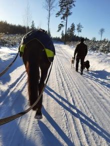 210206 På töm runt Valnarstorp med Lars och hundarna i solen.