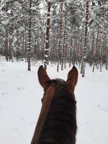 210210 Fina mönster av snön på trädstammarna.
