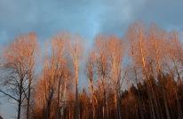 210307 Solen lyser fint i träden.