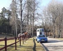 210404 Gurra håller altid trailerna sällskap när någon är här och tränar :).