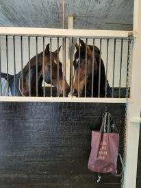 Dagboxar för hästarna hela kursen