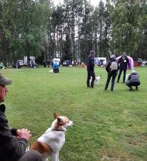 Det var två raser på plats och väldigt mycket hundar. Väntan blev lång.