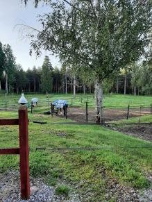 210901 Pleggad och större hage ger lugn.