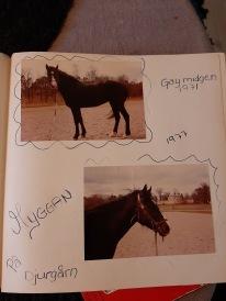 Helen ägde Myggan som jag red jätteofta på gamla Djugårdsstallet.