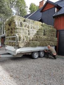 210905 Dagens lunchgympa klar. Sålde 153 balar hö.