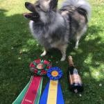 jizza champion 4