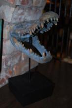 Naturtrogen krokodilskalle