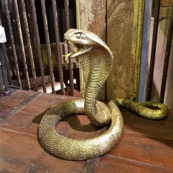 Guldig kobra
