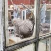Råttan som hoppar genom fönstret!