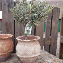 Vackraste olivkrukan