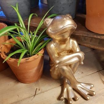 Happy frog - Groda A