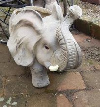 Elefantkruka