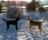 Dagis-Zingo & Bruce ( Bästa vänner )