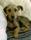 Dagis-Larry tar igen sig efter långpromenaden i soffan augusti-16