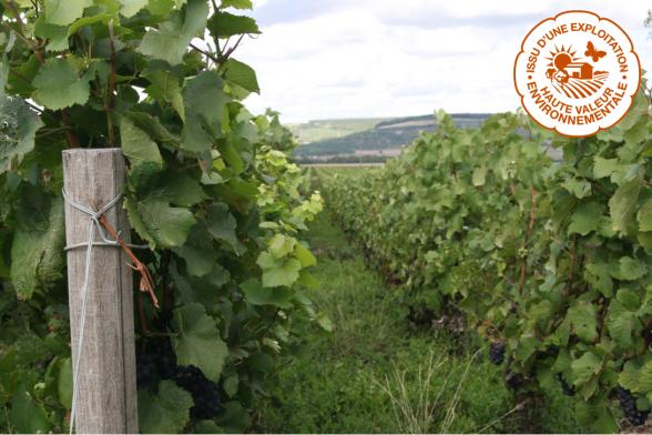 Champagne Mathelins hållbara odling HVE 3.