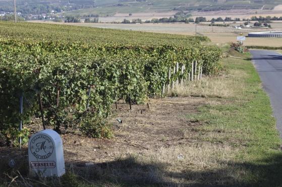 Vy från Champagne Mathelins vinfält i september 2018.