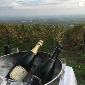 Champagne Plener Grand Cru vinodling.