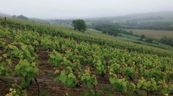 Vinodling Champagne Villesenière.