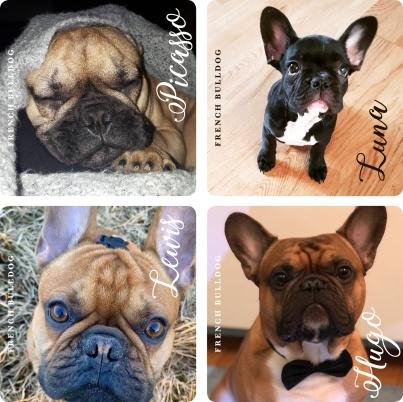 De vinnande bilderna för våra glasunderlägg med franska bulldoggar.