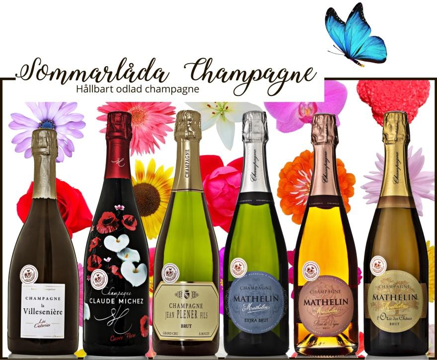 Sommarlåda Champagne.