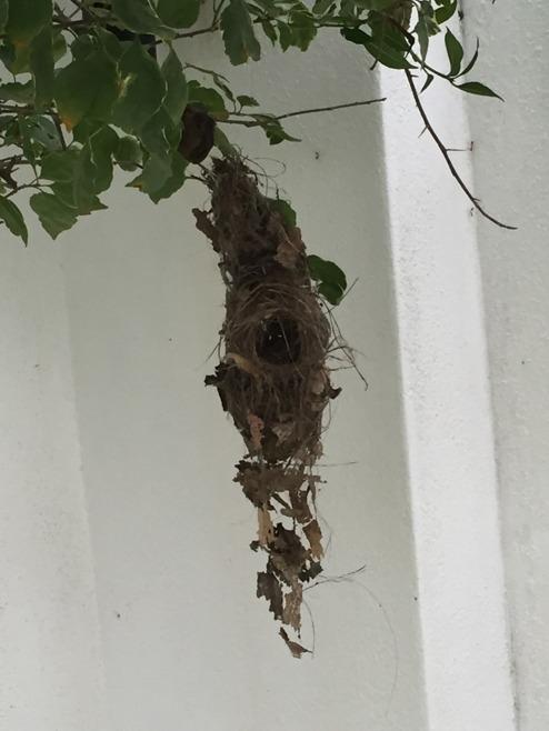 """""""Fågelfamiljeinflyttning"""" i trädgården!"""