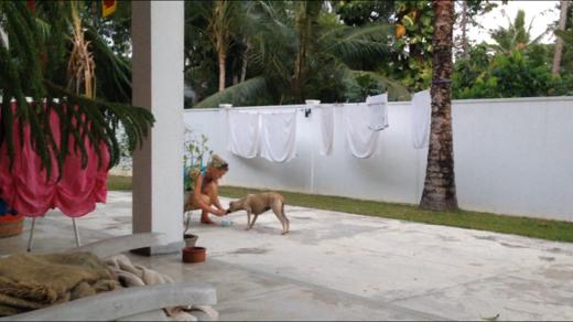 En strykrädd hund som äntligen vågar äta ur handen!