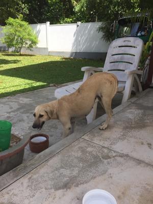 Så äter en hund som aldrig tidigare ätit ur en skål, utan tidigare bara ätit direkt platt från gatan. Det gäller liksom att komma ner...