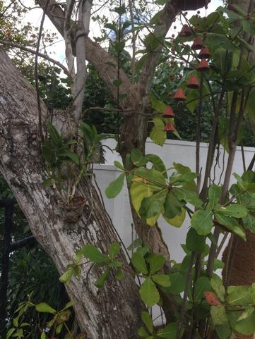 En liten orkide och klockspel i trädet.