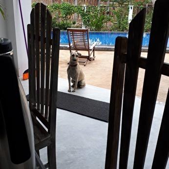Bilden på Pippi som hamnade på Facebook.