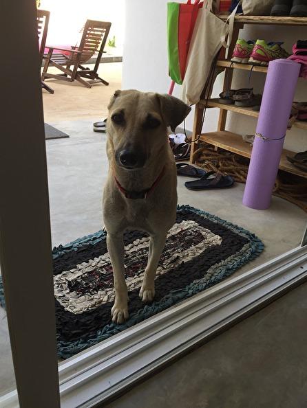 Nu har Pippi sin sovplats på mattan utanför vårt rum, alltid!