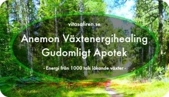 Anemon Växtenergihealing Gudomligt Apotek. Healingkurs från Vita Safiren. Distanskurs healingmetod.