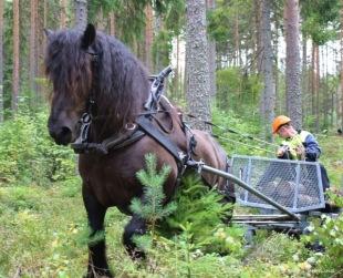 Linus tacklar den snåriga terrängen på skogsbanan.