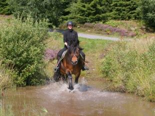 Karin & Caramell känner på vattenhindret.