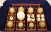 Äggkläckningsmaskin Real 24 semiautomatisk