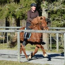 Fuxstoet Lyra från Lind med Titti Juhlin i sadeln.