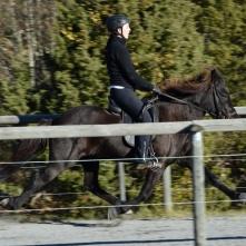 Ör frá Akrakoti riden av Sofie Fältsjö