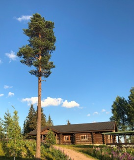 Stickläger Fattigskogen 2021 - Stickläger i Fattigskogen v.32