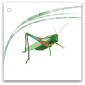 105-gräshoppa