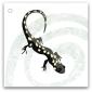 121-salamander