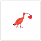 146 ibis med hjärta