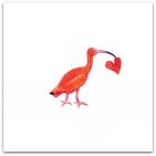 146-ibis med hjärta