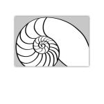 182 6x9 snäcka nautilus